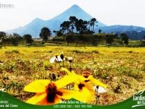 jardines-debursa-inmobiliaria-panoramica-web-15-2